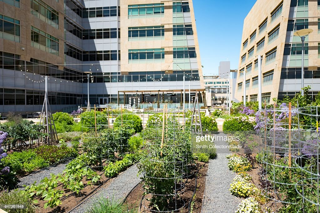 Rooftop Garden Pictures Getty Images