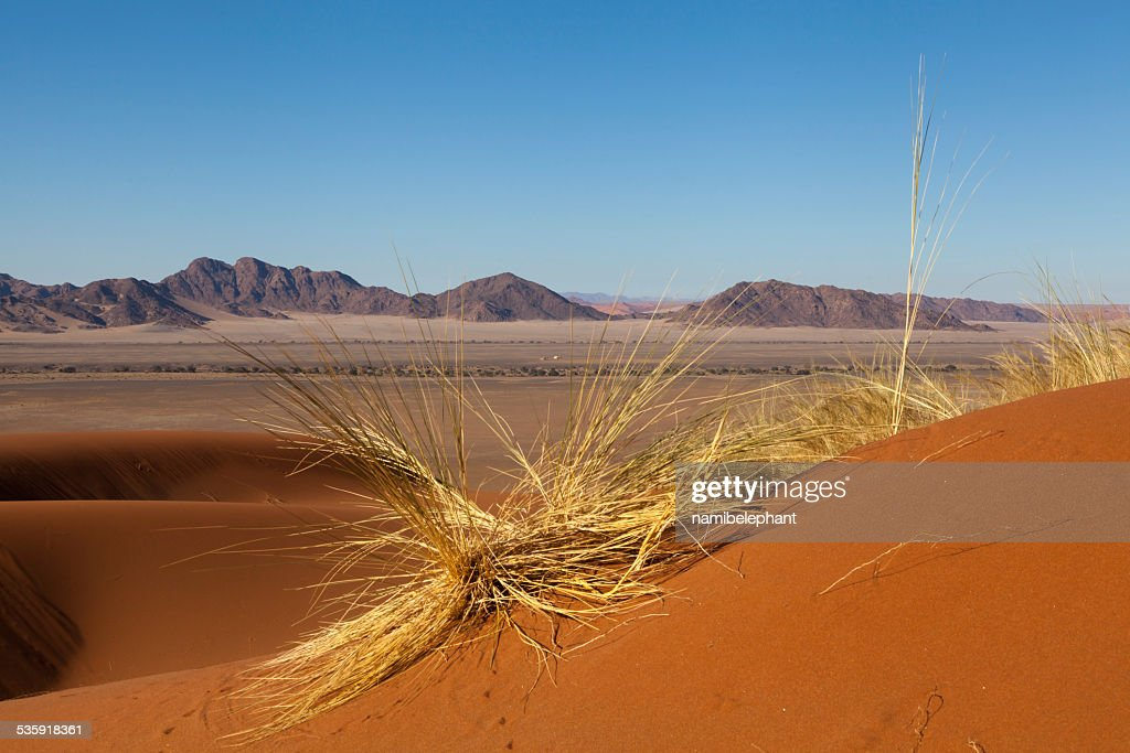 in the Namib Desert : Stock Photo