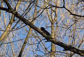 Spring, April, tree, branches, bird, blackbird, black, wild animal, songbird, yellow beak, blue sky