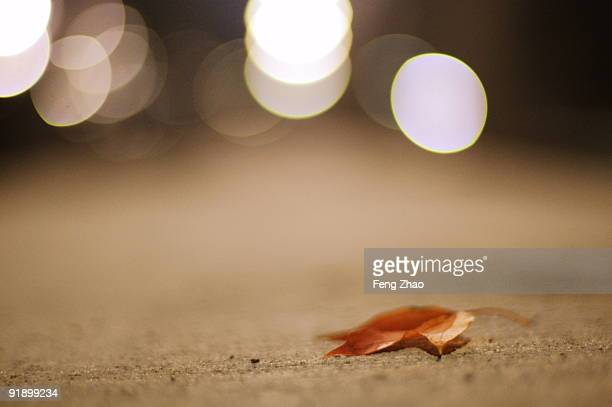 In the Streetlights of Autumn