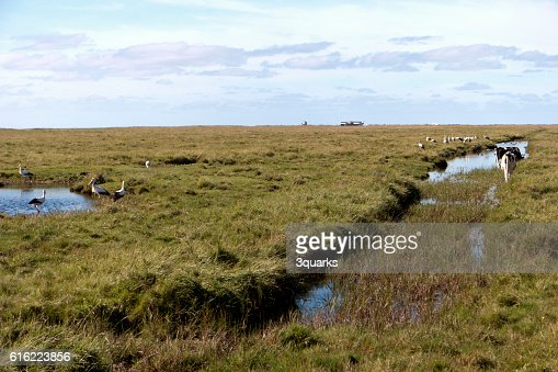 In the thurm cap of St. Peter-Ording in Germany : Stock Photo