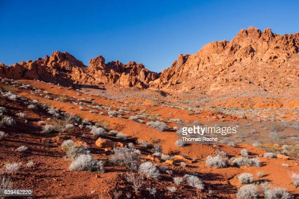 In the Valley of Fire in the Mojave desert