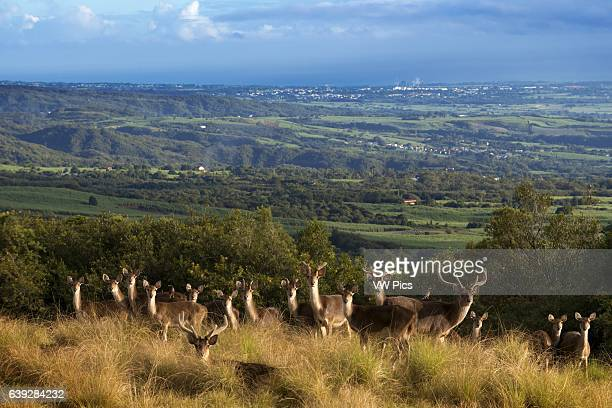 In the vicinity of Hotel Diana Dea Lodge Deer roam Located 600 meters above sea level overlooking SainteAnne in the middle of a game reserve of 150...