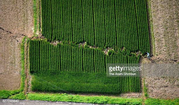 In this aerial image a fault spilts a field on May 02 2016 in Mashiki Kumamoto Japan More than 12000 homes and buildings in Kumamoto Prefecture that...