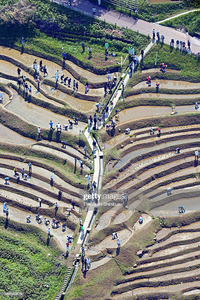 In this aerial image, people plant rice at Shiroyone Senmaida rice terrace on May 12, 2013 in Wajima, Ishikawa, Japan. 40 percent of the rice terrace once became fallow field due to the lack of farmers and successors, now with the help of volunteers, most of the 1,000 rice paddies returned to be cultivated.