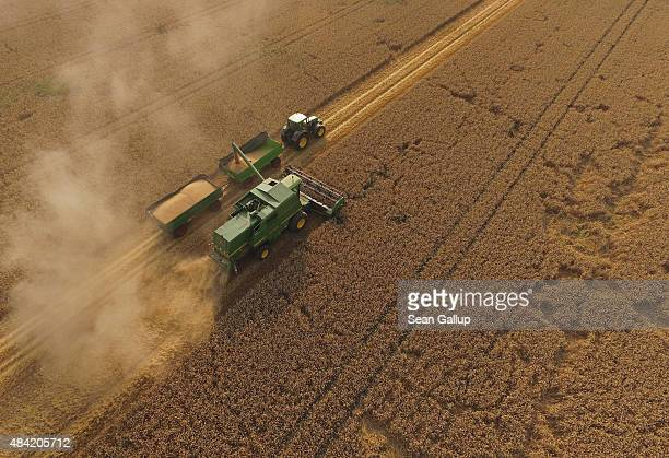 In this aerial view a combine harvests summer wheat at a cooperative farm on August 14 2015 near Grossderschau Germany The German Farmers'...