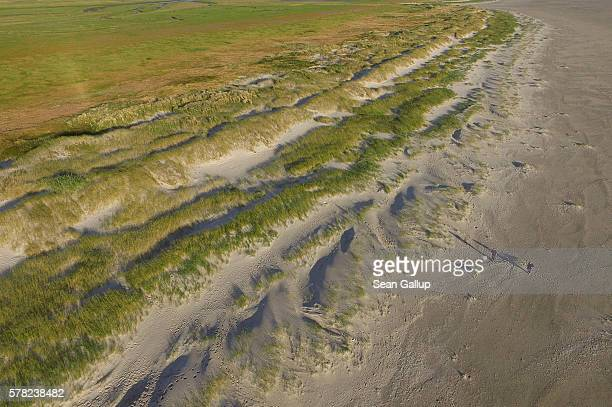 In this aerial view a couple walk their dog near protected dunes and saltwater marshes that stretch along the beach on July 18 2016 at...