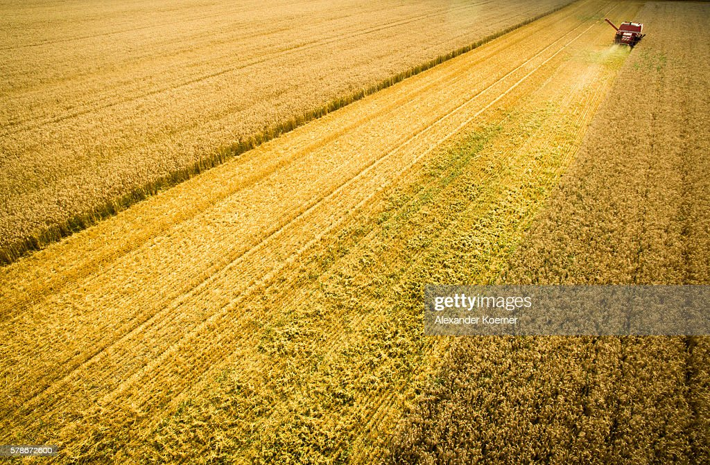 In this aerial view a farmer drives his tractor while harvesting summer wheat on July 21 2016 near Neustadt am Rubenberge Germany According to local...