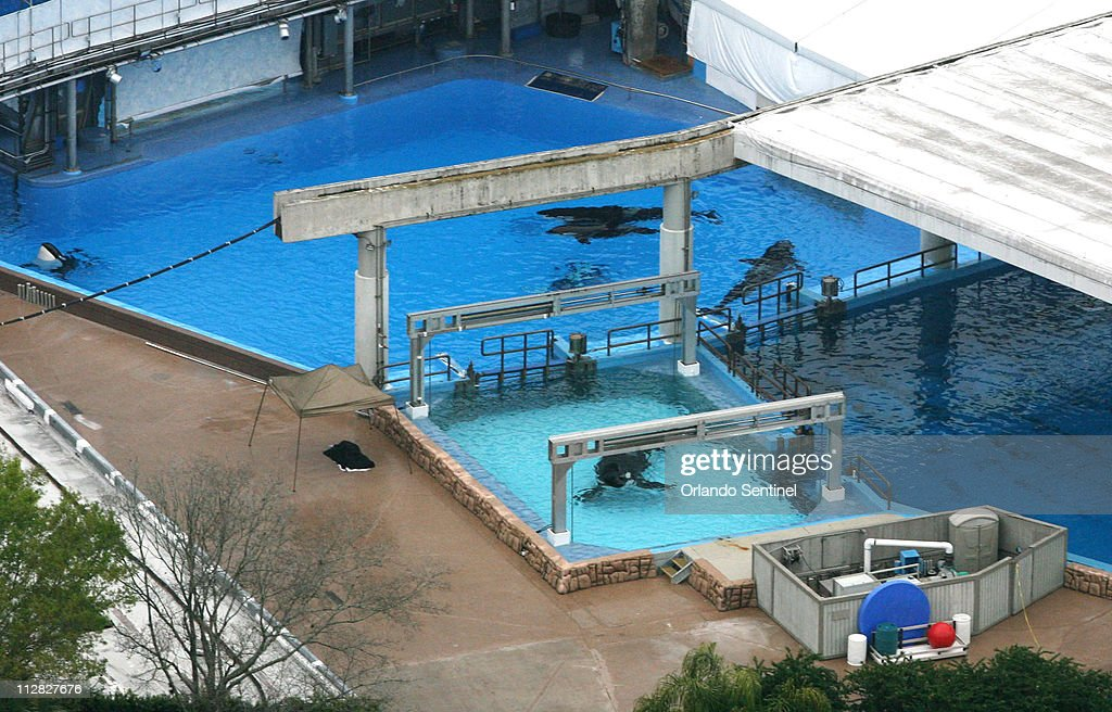 Incidents At Seaworld Parks: Dawn Brancheau Pictures