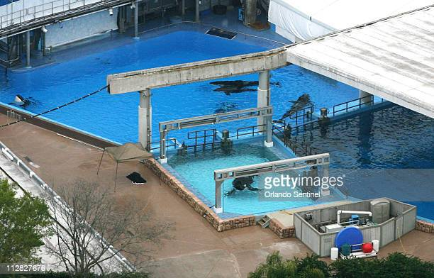 In this aerial view February 24 at SeaWorld the body of whale trainer Dawn Brancheau lies under a black tarp A killer whale grabbed and dragged her...