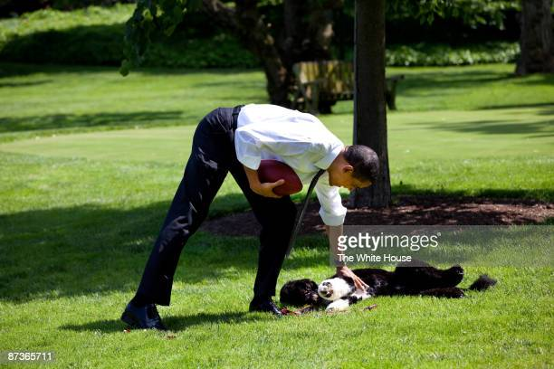 In this handout from the The White House US President Barack Obama plays football with the family dog Bo on the South Lawn of the White House May 12...