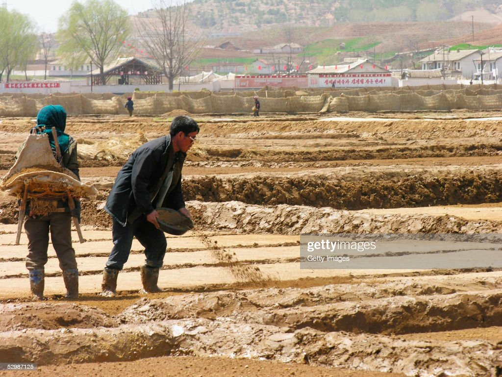 In this handout from the United Nations, co-operative farm workers prepare fields for rice transplanting near Sariwon city, on 20 April 2005 North Hwanghae province, North Korea. The United Nations World Food Programme's director for Asia, Tony Banbury, said in Seoul April 15, that a slump in donations for the agency's operation in North Korea would force it to halt aid distributions to almost all its 3.8 million 'core' beneficiaries over the next two months.