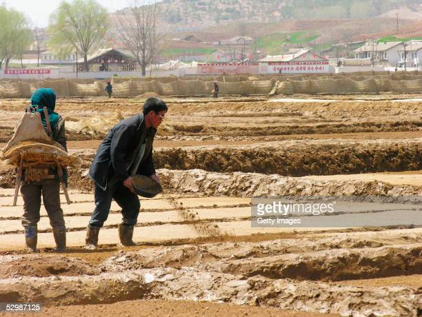 In this handout from the United Nations cooperative farm workers prepare fields for rice transplanting near Sariwon city on 20 April 2005 North...