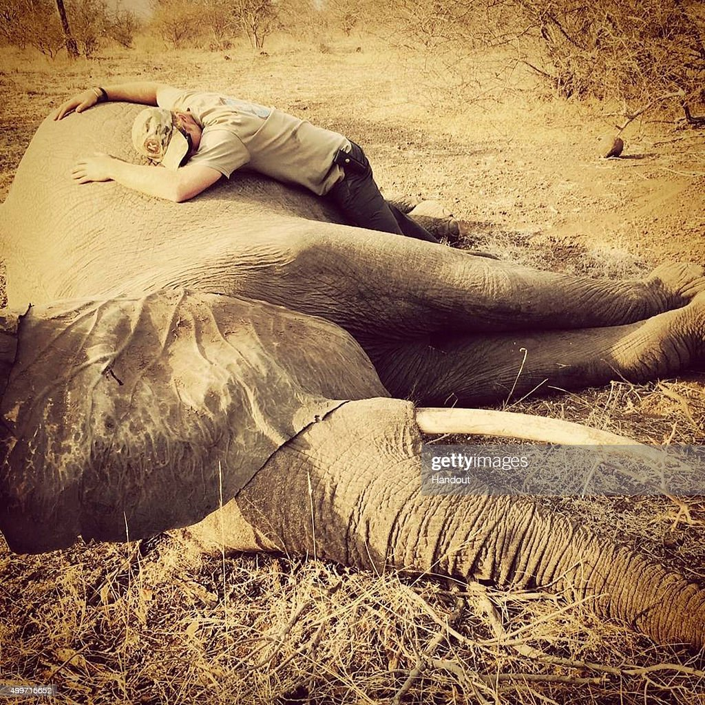 In this handout image released by Kensington Palace via Instagram on December 2, 2015, Prince Harry embraces a sedated female elephant in Kruger National Park, South Africa. Prince Harry is visiting South Africa as part of a Royal Tour that has included the Opening of a new Charity Centre for children in Lesotho (Sentebale's Mamohato Children's Centre) and includes stops in Durban, Cape Town, Kruger National Park and Johannesburg.