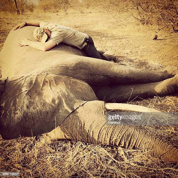 In this handout image released by Kensington Palace via Instagram on December 2 Prince Harry embraces a sedated female elephant in Kruger National...