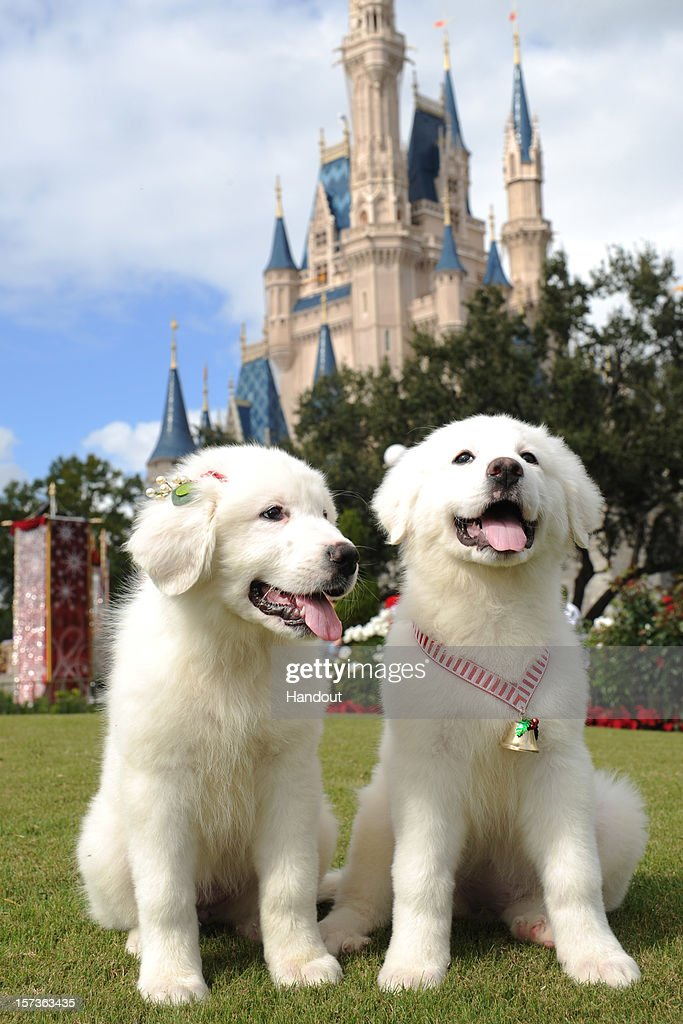 In this handout photo provided by Disney, canine stars from Disney's new holiday DVD and Blu-ray film, 'Santa Paws 2: The Santa Pups,' pose while taping the 'Disney Parks Christmas Day Parade' TV special in the Magic Kingdom park at Walt Disney World on December 1,2012 in Lake Buena Vista, Florida. The annual parade telecast, which airs Dec. 25, 2012 at various times across the country on ABC-TV, features celebrity performances and segments taped at Walt Disney World in Florida and Disneyland Resort in California. Featured performers include Lady Antebellum, Backstreet Boys, Brad Paisley, Phillip Phillips, Colbie Caillat, TobyMac, Yolanda Adams, Ross Lynch, the cast of 'Newsies' and a U.S. Marine Corps Band. Nick Cannon and Mario Lopez host the special.