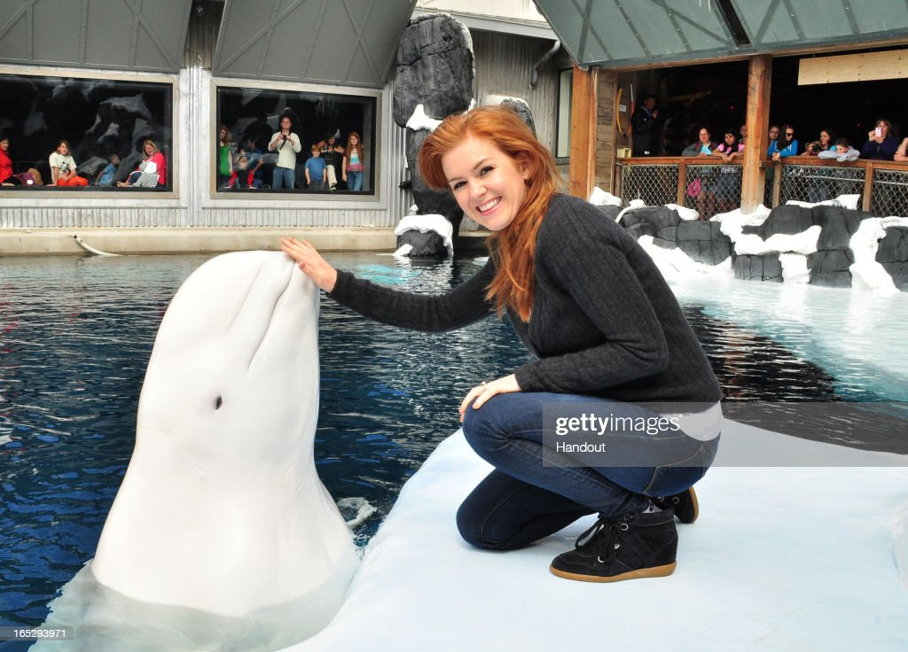 In this handout photo provided by SeaWorld, actress <a gi-track='captionPersonalityLinkClicked' href=/galleries/search?phrase=Isla+Fisher&family=editorial&specificpeople=220257 ng-click='$event.stopPropagation()'>Isla Fisher</a> makes a new friend in Nanuq, a 2,200-pound beluga whale, at SeaWorld San Diego's Wild Arctic attraction on April 2, 2013 in San Diego, California. The co-star of the soon to be released motion picture 'The Great Gatsby' visited the marine park with her family where they also met sea turtles, seals and sea lions, and Humboldt penguins during their behind-the-scenes tour.