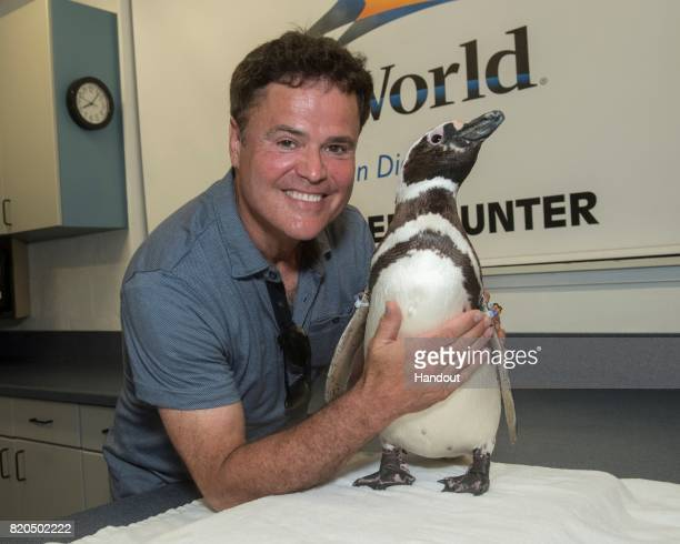 In this handout photo provided by SeaWorld San Diego Singer/actor Donny Osmond meets a Magellanic penguin while visiting the Penguin Encounter...