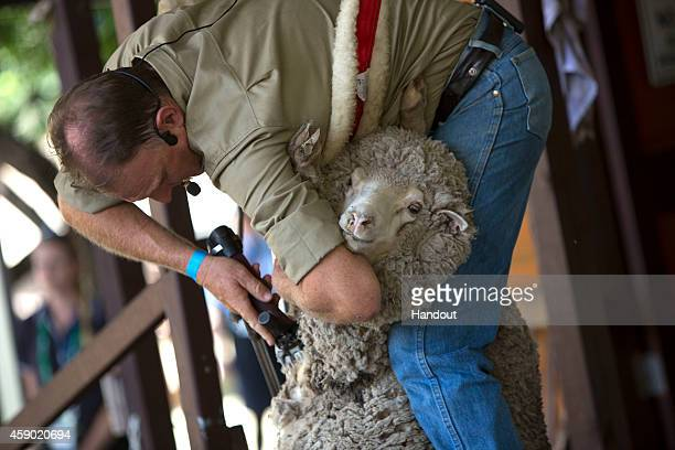 In this handout photo provided by the G20 Australia Spouses watch a sheep shearing display at the Lone Pine Koala Sanctuary as part of the G20...