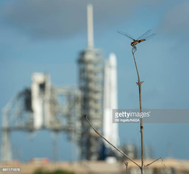 In this handout provided by the National Aeronautics and Space Administration a dragonfly is seen near the SpaceX Falcon 9 rocket with the Dragon...