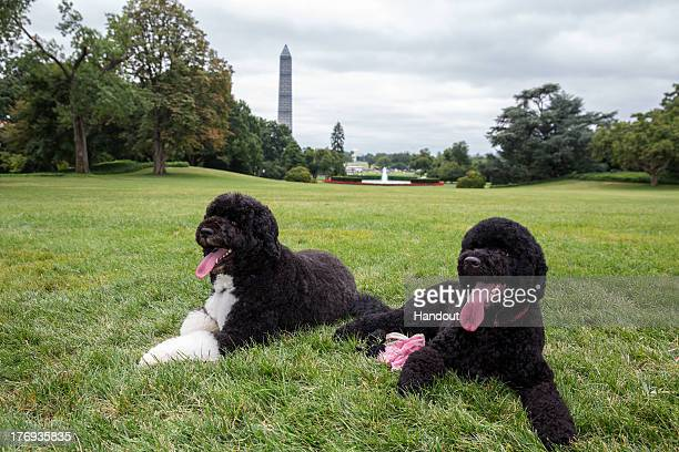 In this handout provided by the White House Bo and Sunny the Obama family dogs on the South Lawn of the White House on August 19 2013 in Washington...