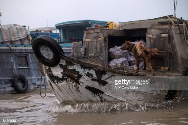 In this July 17 2017 photograph a dog marks the door of a boat selling tapioca in a canal off the Song Hau river at the floating Cai Rang marketin...