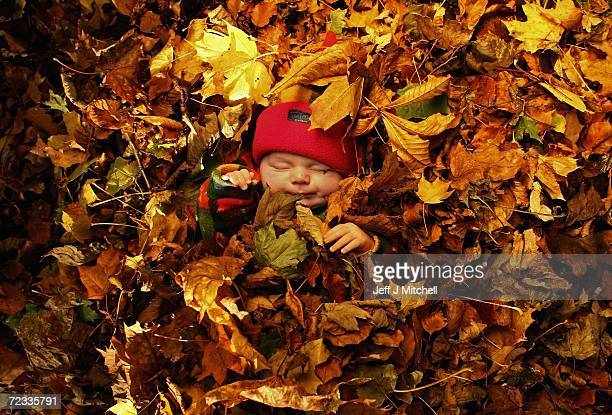 In this photo illustration fallen autumn leaves form a backdrop for a portrait of a sleeping baby in Dumbarton's Levengrove Park November 1 2006 in...
