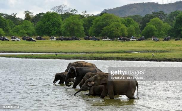 In this photo taken on June 24 Sri Lankan elephants drink water in Minneriya National Park The Sri Lankan elephant is one of three recognised...