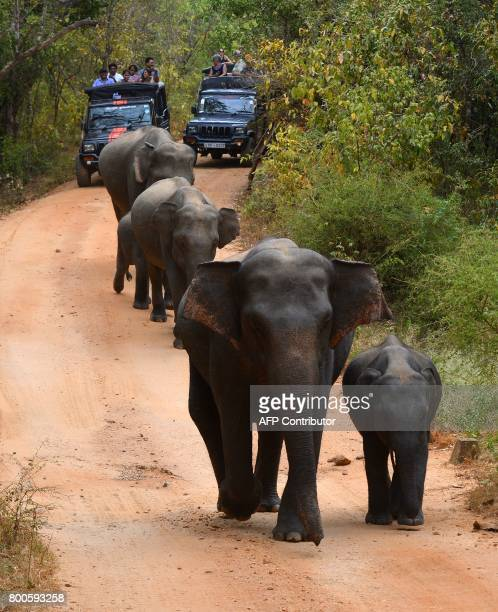 In this photo taken on June 24 tourists watch a Sri Lankan elephant walking through a field in Minneriya National Park The Sri Lankan elephant is one...