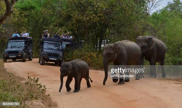 In this photo taken on June 24 tourists watch a Sri Lankan elephants walking through a field in Minneriya National Park The Sri Lankan elephant is...