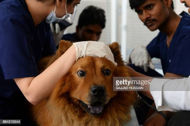 In this photograph taken on April 24 Indian vets examine dog Muffin at the Renalvet clinic for animals in New Delhi Acupuncture blood filtration...