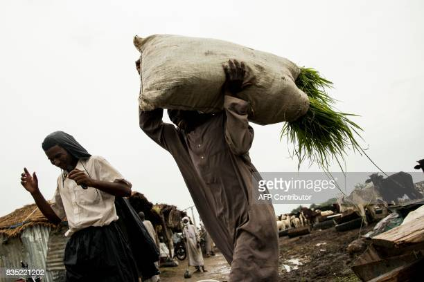 In this photograph taken on August 15 a man carries food for sheep and goats at a market ahead of Eid in the Chadian capital of N'Djamena / AFP PHOTO...