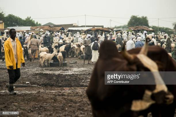 In this photograph taken on August 15 vendors and customers buy and sell sheep and goats at a market ahead of Eid in the Chadian capital of N'Djamena...