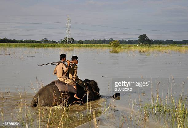In this photograph taken on August 17 Indian forest rangers ride on an elephant as they patrol in the flood affected Pobitora Wildlife Sanctuary at...