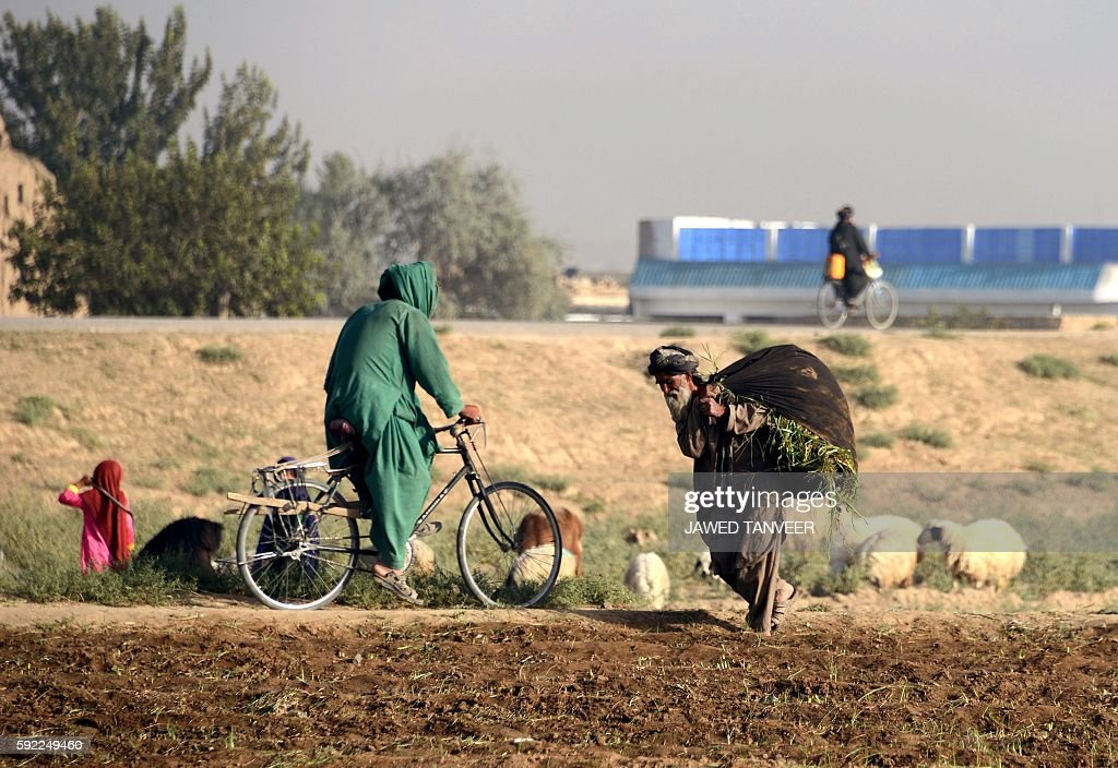 In this photograph taken on August 19 a woman cycles past an elderly Afghan villager carrying a bundle of grass over his shoulders in Kandahar / AFP...