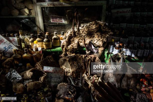 In this photograph taken on January 19 a skin of a rare wild cat is seen displayed with other parts of wild animals for sale at the traditional...