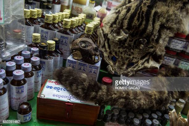 In this photograph taken on January 19 a skin skull and tail of a rare wild cat is seen displayed for sale at the traditional medicine shop at the...