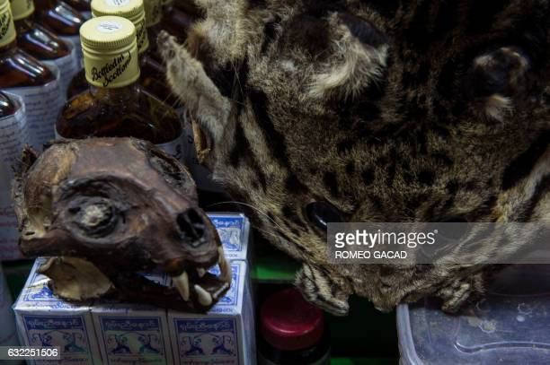 In this photograph taken on January 19 a skull and skin of a rare wild cat is seen displayed for sale at the traditional medicine shop at the...