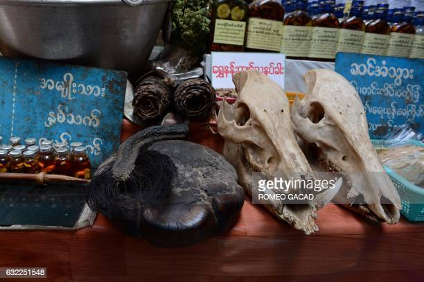 In this photograph taken on January 19 an elepant's tail and foot seen at center and wild boar skull seen at right is displayed for sale at the...