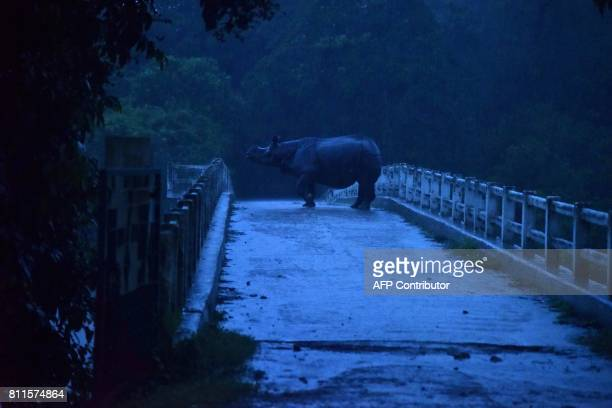 In this photograph taken on July 9 2017 an Indian onehorn rhinoceros takes shelter on a bridge during floods at Kaziranga National Park about 250...