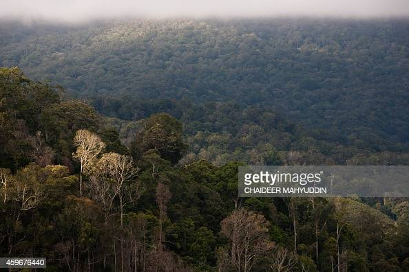 In this photograph taken on November 23 the lush forest cover of Leuser National Park is seen from Gayo Lues district in Aceh province located in...