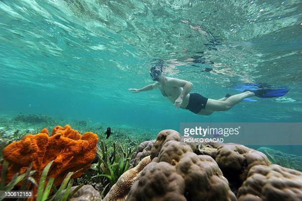 In this photograph taken on October 22 2011 a tourist snorkles over coral reef in Raja Ampat's Mansuar Island located in eastern Indonesia's Papua...