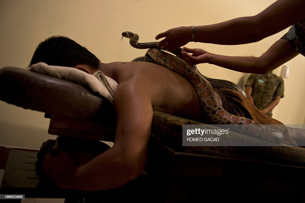 In this photograph taken on October 30, 2013, a masseuse places pythons on the back of Indonesian customer Ferdi Tilukay, a 31 year old accountant, for a 'snake body massage' session at the Bali Heritage Reflexology and Spa located in the Indonesian capital city of Jakarta. Lying on a massage table at a spa in the Indonesian capital Jakarta, Feri Tilukay closed his eyes and smiled blissfully as three enormous snakes slithered all over him.
