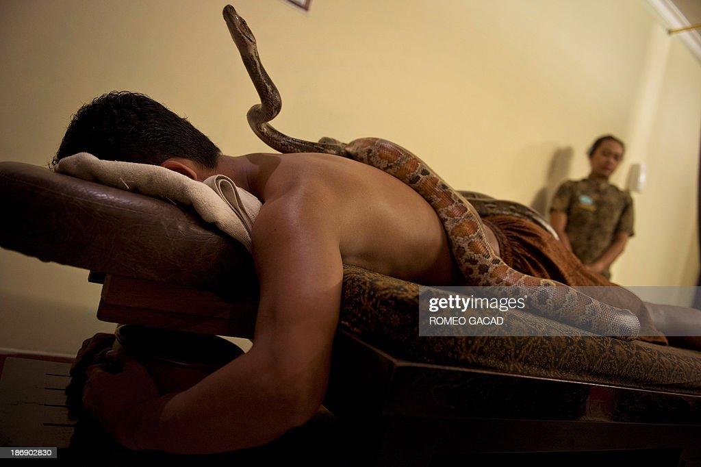 In this photograph taken on October 30, 2013, a masseuse watches as pythons slither on the back of Indonesian customer Ferdi Tilukay, a 31 year old accountant, for a 'snake body massage' session at the Bali Heritage Reflexology and Spa located in the Indonesian capital city of Jakarta. Lying on a massage table at a spa in the Indonesian capital Jakarta, Feri Tilukay closed his eyes and smiled blissfully as three enormous snakes slithered all over him.
