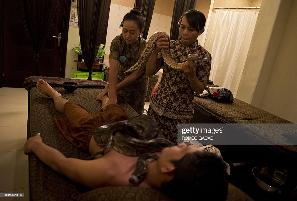 In this photograph taken on October 30, 2013, two masseuses place pythons on Indonesian customer Ferdi Tilukay, a 31 year old accountant, for a 'snake body massage' session at the Bali Heritage Reflexology and Spa located in the Indonesian capital city of Jakarta. Lying on a massage table at a spa in the Indonesian capital Jakarta, Feri Tilukay closed his eyes and smiled blissfully as three enormous snakes slithered all over him.