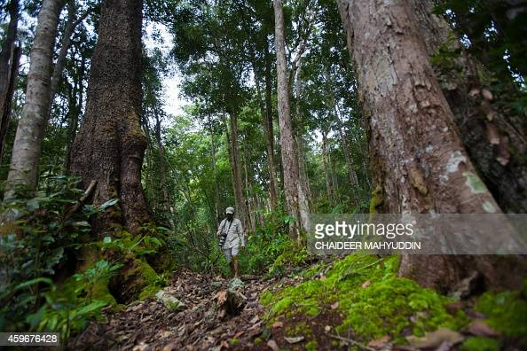 In this photograph taken onf November 23 a photographer hikes in the Leuser National Park in Gayo Lues district in Aceh province located in...