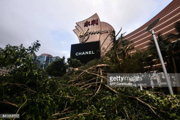 In this picture taken on August 24 damaged trees are seen in front of the Wynn casino resort in Macau after Typhoon Hato hit the city When Typhoon...