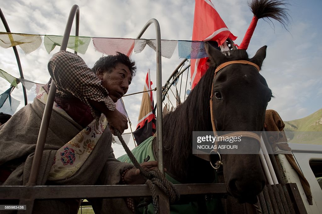 In this picture taken on July 26 2016 a Tibetan nomad horseman secrures his horse on the back of a truck in order to travel to a horse race nearby on...