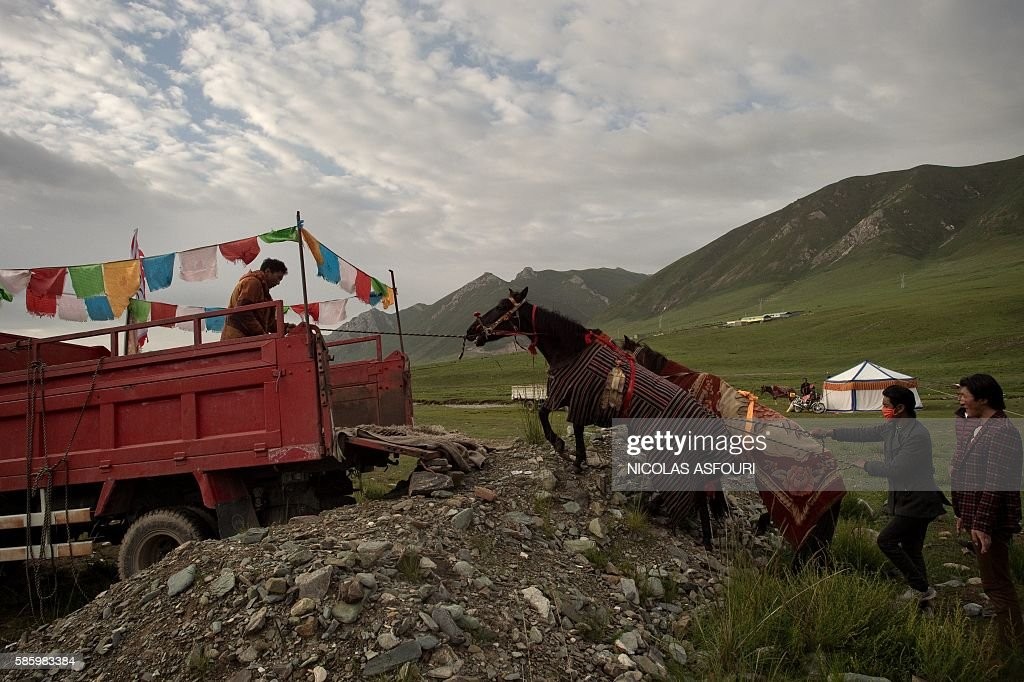 In this picture taken on July 26 2016 Tibetan nomad horsemen load their horses on the back of a truck as they will travel to participate to a race...