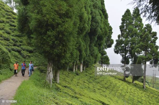 In this picture taken on July 7 2017 shows people walking along a path at high altitude Happy Valley Tea garden during an indefinite strike called by...